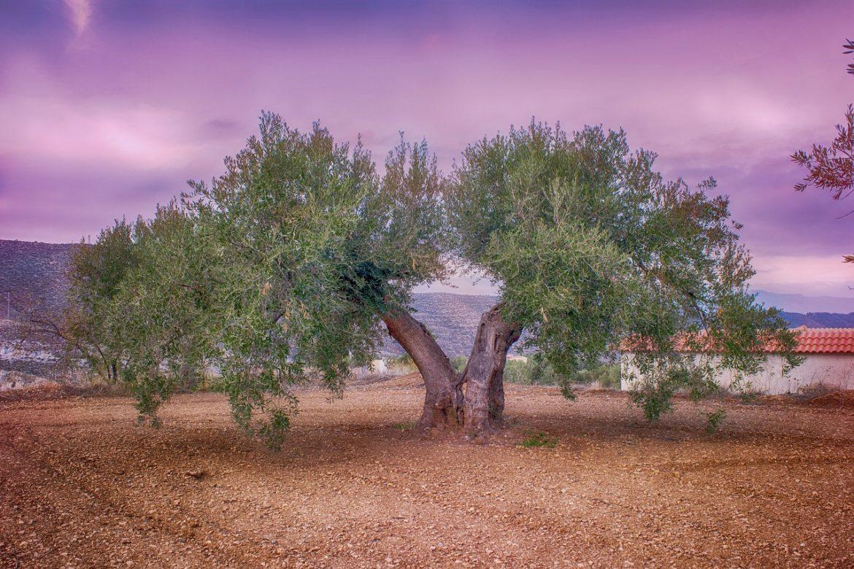 medio ambiente en el olivar