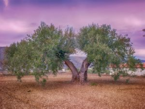 Desarrollo sostenible y medio ambiente en el olivar.